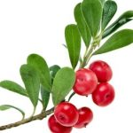Extract deBearberry
